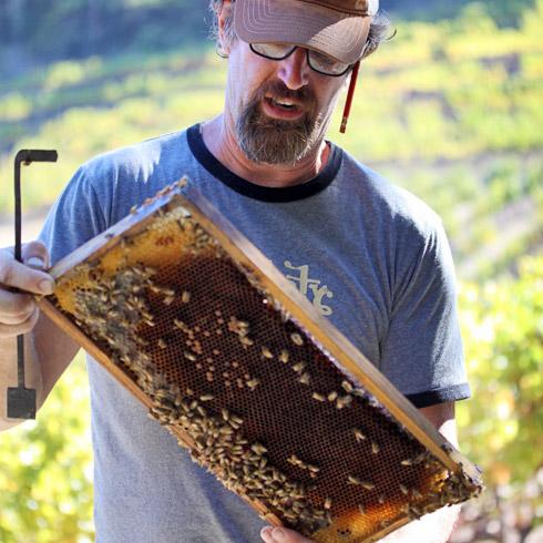 Honey Bees Sideways