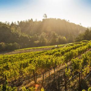 Estate vineyard,